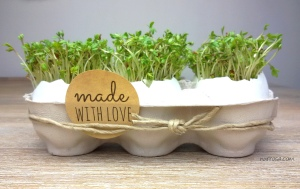 Kresse-Eier zu Ostern basteln DIY nurrosa