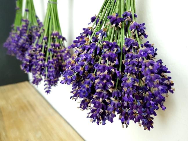 Lavendel Rezepte