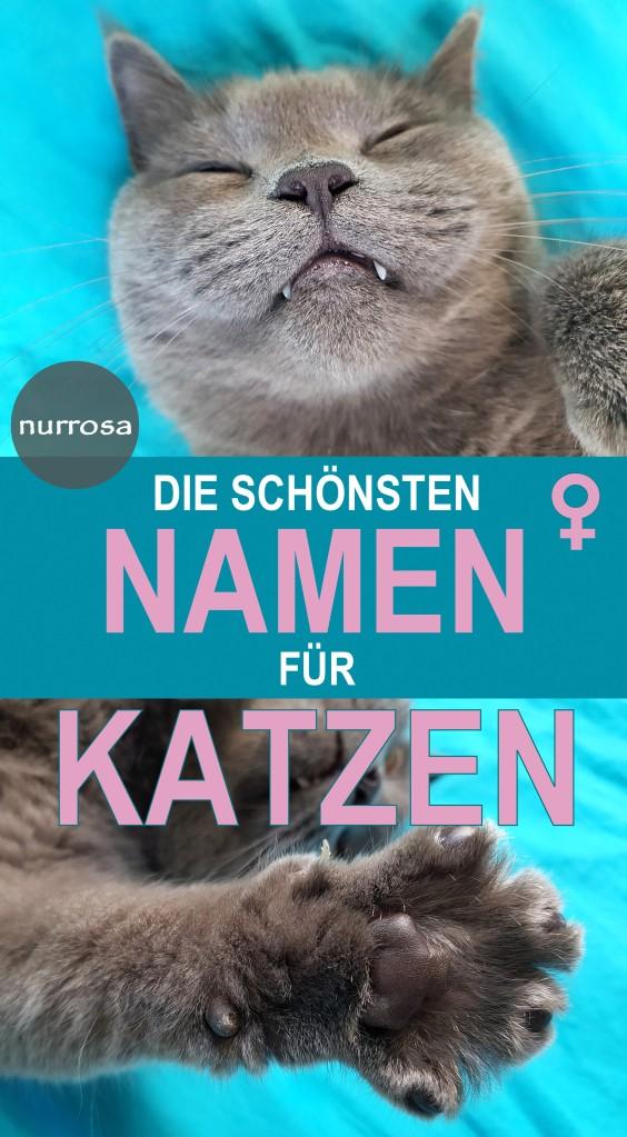 Die schönsten Namen für weibliche Katzen