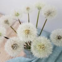 Pusteblumen haltbar machen - DIY